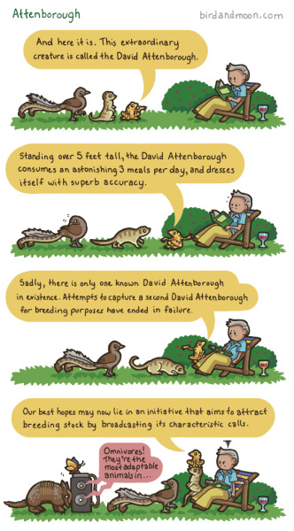 "birdandmoon:  Like so many biology geeks, I grew up with David Attenborough documentaries. This comic includes a shout-out to some Attenborough favorites, including the critically endangered Panamanian Golden ""Waving"" Frog.  The original comic is over here!"