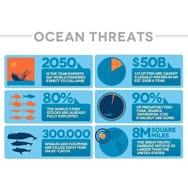 rebeccaxhart:  Learn about how we effect this planet, respect the ocean.