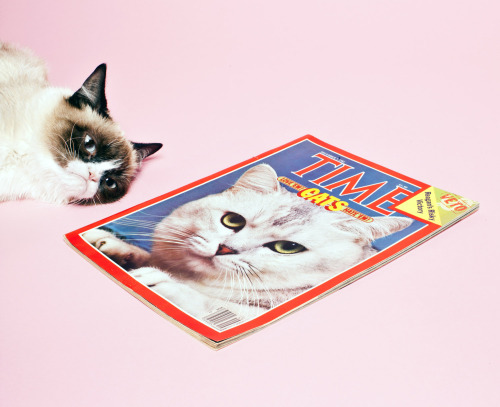 timelightbox:  Photograph by Elizabeth Renstrom for TIME Today Grumpy Cat pounced on TIME's Manhattan office—in case you're wondering, she was not impressed.
