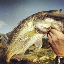 BASS! #spawning #bass #almostdonthatetexassomuchohwait