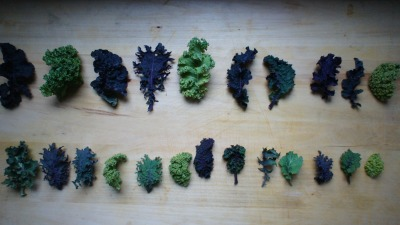 chefstevedustin:  lovagemetender:  Baby kale from Tamarack Hollow Farm, bought this morning at the Union Square Greenmarket.  Beautiful shot.