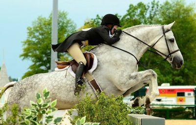 equestrianshowjumping:  e-q-u-i-t-a-t-e:  Source  I want everything in this pic, EVERYTHING!
