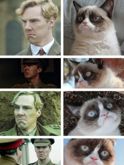 benedictfrowning:   Occasionally, Benedict channels grumpy cat. (Found on reddit)  Reading Parades End right now. Now all I'll see is grumpy cat…