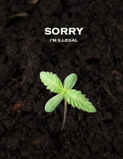 outofwraps:  jeremythestoner:  You're not illegal in my house little plant  AMEN!