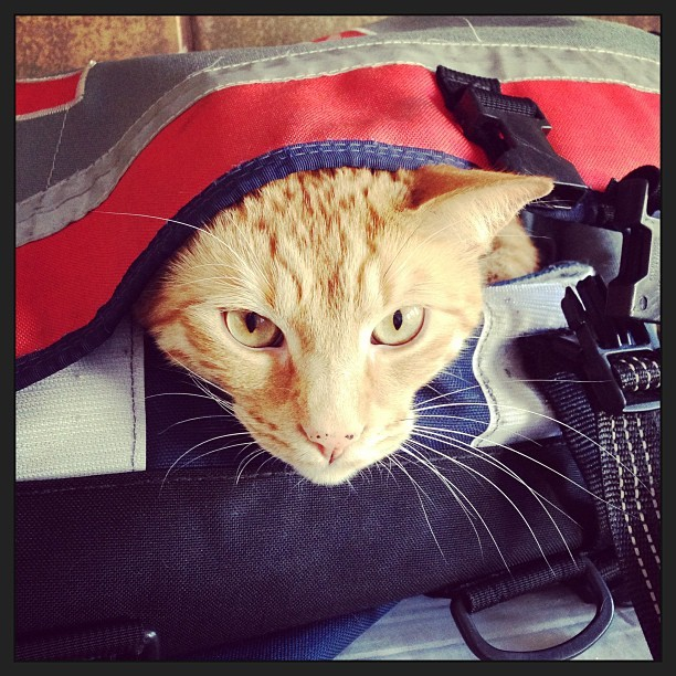 Cats. They love #messengerbags. Also, new stock and markdowns are up on zugsterbags.com.