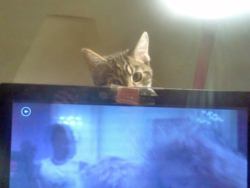 getoutoftherecat:  no, cat, i've still got a full episode to watch.