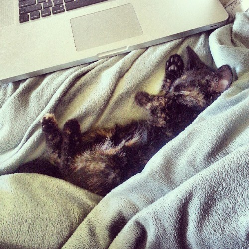 Somehow comfortable kitten