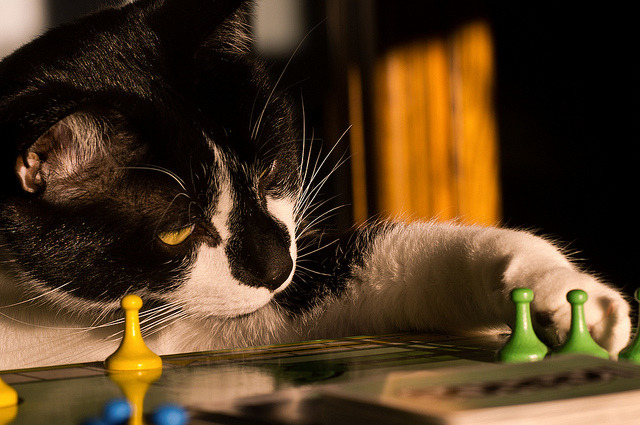 Snickers playing Sorry! by loco's photos on Flickr.