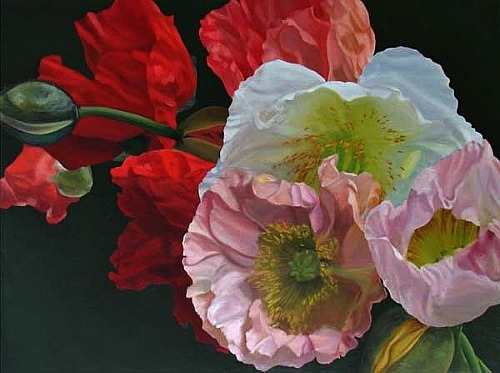 Don Rankin Poppies (Baroque) #5  2008