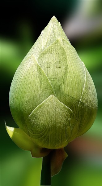 putdownyourdreamjournalanddance:  This little buddha bud is the shit