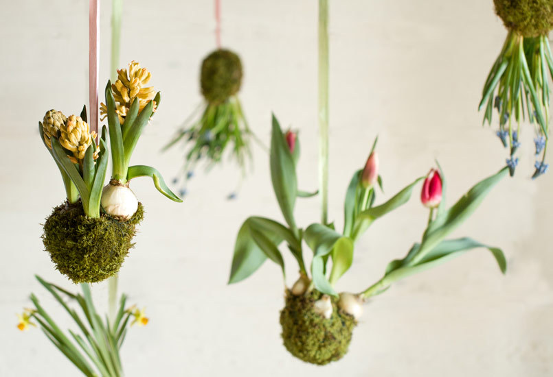 check out these spring bulb kokedama i made for terrain..