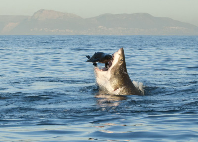 CHOMP MOTHERFUCKER CHOMP (via National Geographic Photo Contest 2012, Part II - In Focus - The Atlantic)