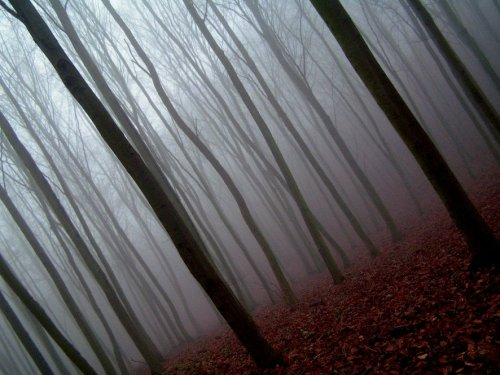 ominousplaces:  Fog in forest, by EtanOlka.