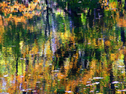samlerbrown: Fall Abstract by Stanley Zimny on Flickr.