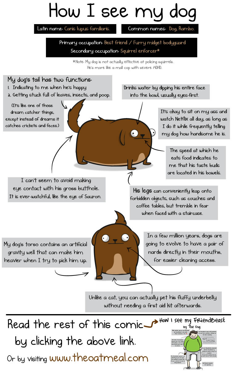 oatmeal:  How I see my dog VS how my dog sees me.  You can view the rest of the comic here:   http://theoatmeal.com/comics/dog_how_see