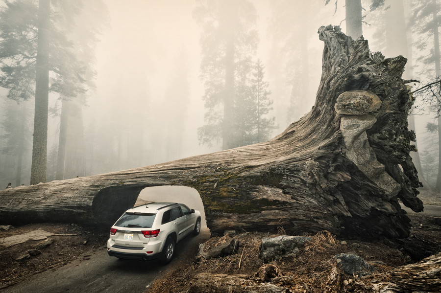 vurtual:  Sequoia Down - Sequoia National Park, California (by Allard Schager)  Tunnel Log is a tunnel cut through a fallen giant sequoia tree in Sequoia National Park. The tree, which measured 275 feet (84 m) tall and 21 feet (6.4 m) in diameter, fell across a park road in 1937 due to natural causes. The following year, a crew cut an 8-foot (2.4 m) tall, 17-foot (5.2 m) wide tunnel through the trunk, making the road passable again.