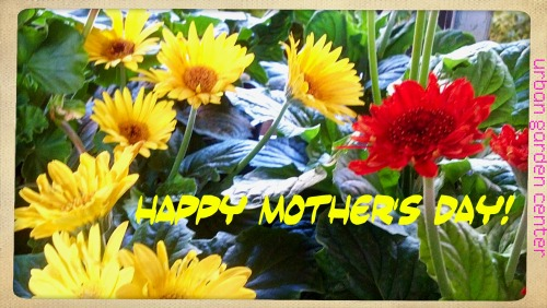 "Happy Mother's Day! Remember, moms love surprises from the garden center ;-) Open Daily 9am to 7pm Spend $100 today and receive a FREE houseplant* *4"" Tropical/Houseplant. While supplies last. Restrictions may apply."