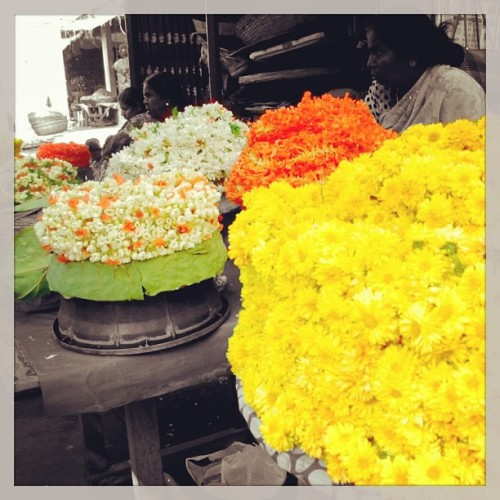 Flower Vendors at the Devaraja Market in Mysore, India (iPhone4 photo edited with Colorsplash) (at Devaraja Market)