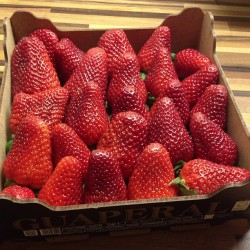 lazygirlrunning:  best tasting strawberries in the world 😍