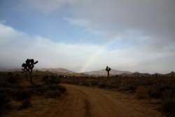 Yesterday morning we had rain in the desert. And a rainbow. I love where I live.