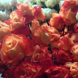 #LOVE! #roses #flowers #rose