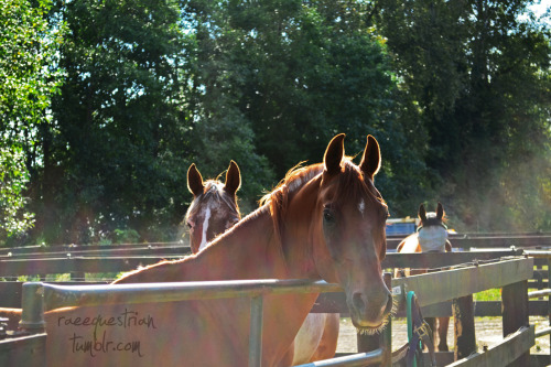 Summer ponies, hence the glare from the sun.