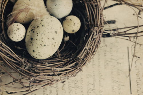menentk:  Nesting by Lorraine Lewis on Flickr.