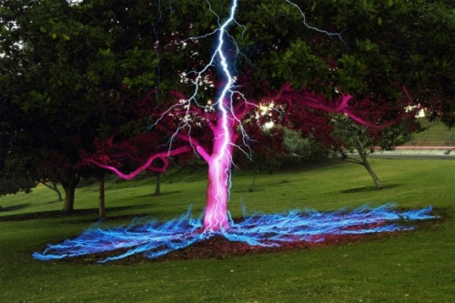 thatscienceguy:  Long exposure picture of a Lightning Bolt hitting a Tree!