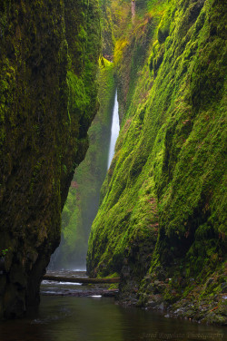 landscapelifescape:  Oneonta Canyon, Oregon, USA Oneonta Sliver by jared ropelato