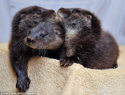 orphaned otters hangin' tough.