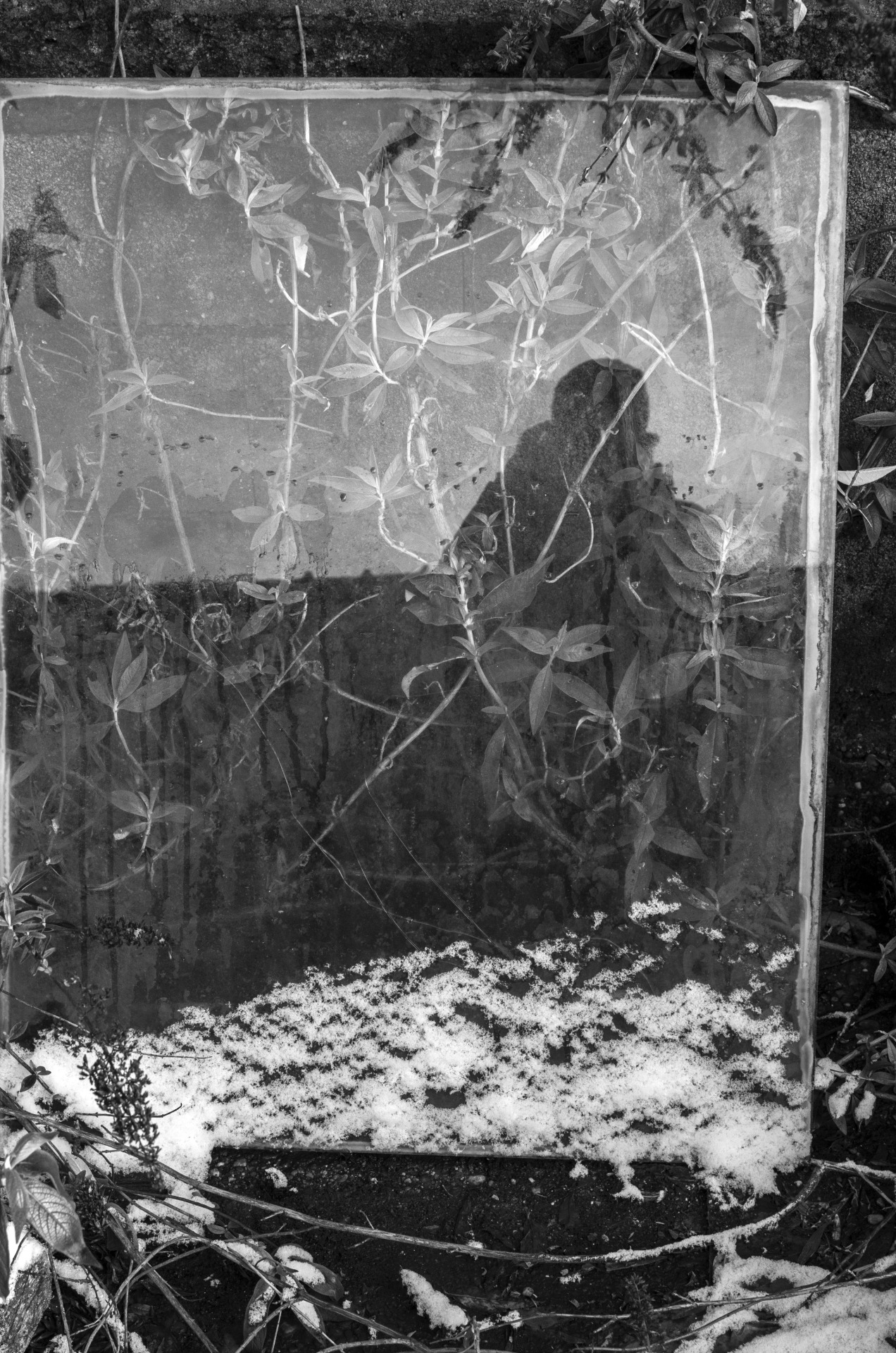 """Self portrait made of glass, leaves and snow"" April 2013. Thomas Simon"