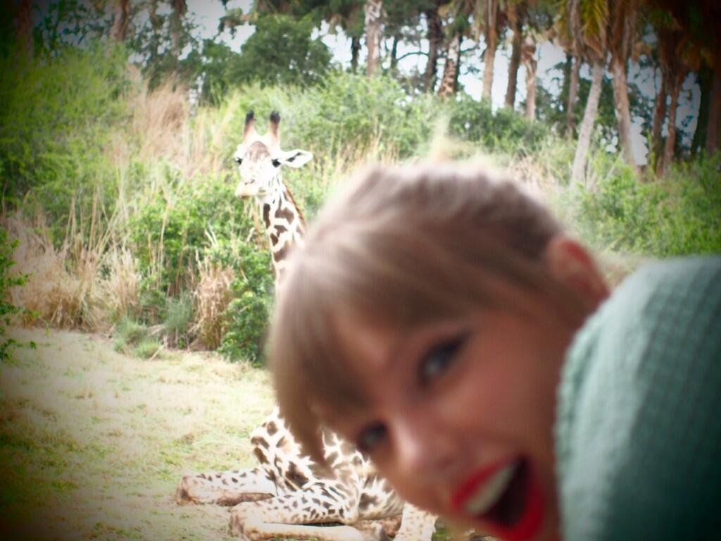 @taylorswift13 Animal kingdom. This giraffe situation.