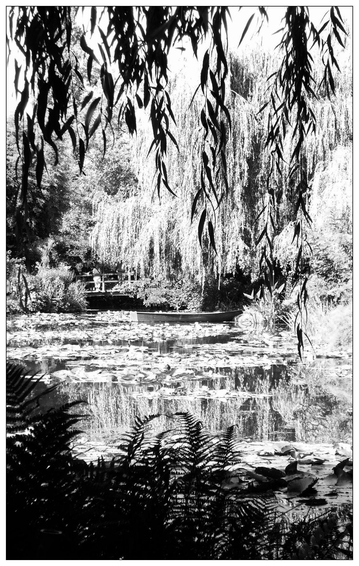 Le saule pleureur Claude Monet's garden at Giverny By yama-bato ©yama-bato More here
