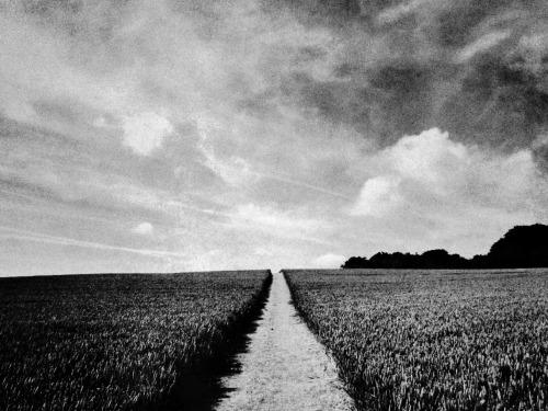 furtho:  A field in summer, Buckinghamshire