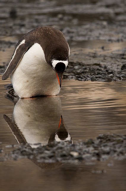 thepenguinblog:  self-reflection by efdixon on Flickr. Intrigued.
