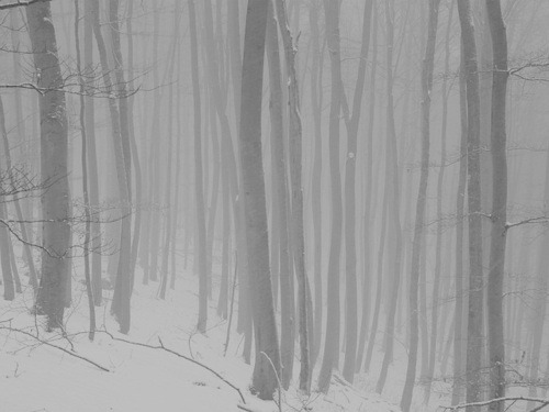 snow winter snowy Woods foggy forest pale forest