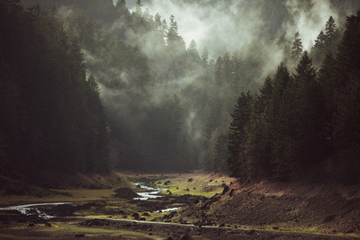 Foggy Forest Creek, by Kevin Russ