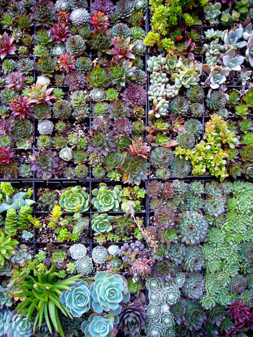 Inspiration: Wall of Succulents
