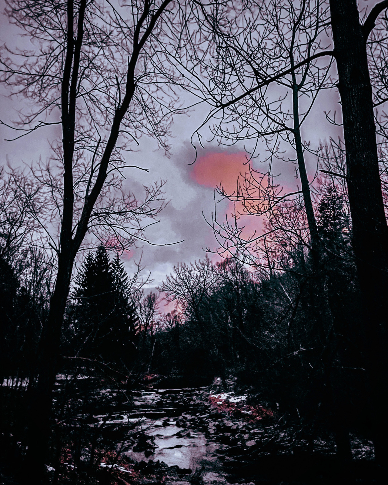 #nature#nature blog#mostly nature#go outside#winter#canada#nature photography#photography#my photography#hiking#sunset#the sky#ftm#nonbinary #shot on iphone