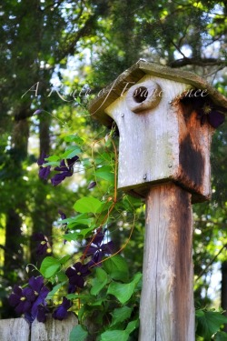 Birdhouse and purple clematis Photographed by Jennifer Weber on May 15, 2013 Columbia, South Carolina