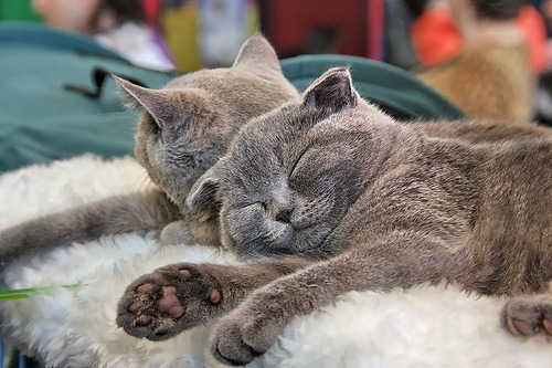 magicalnaturetour:  feneek2010 ~ Sweet Dreams beautiful friends ♥