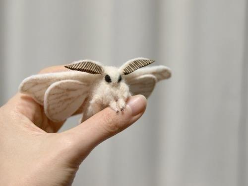 venezuelan poodle moth  cutest bug ever