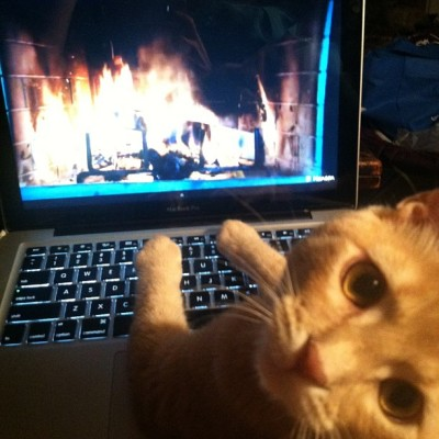 Fire place?! Excuse me while I warm my paws.