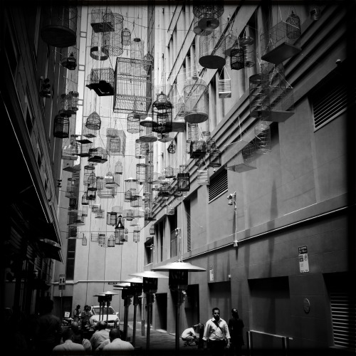 """Birdcage Alley"" Photo by cereus"