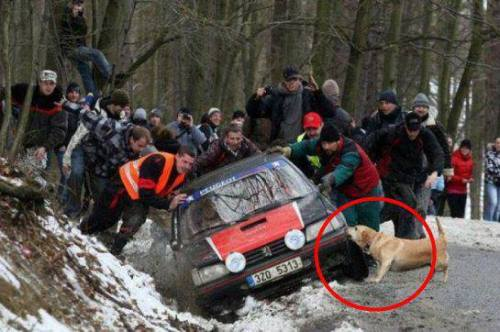 This dog's owner is trapped inside and his dog is trying his best to help him.