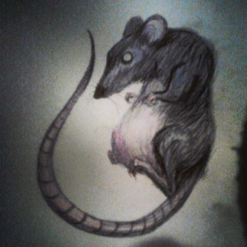 I scribbled a rat.