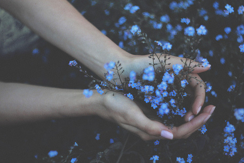 vanishing-melody:  Forget me not