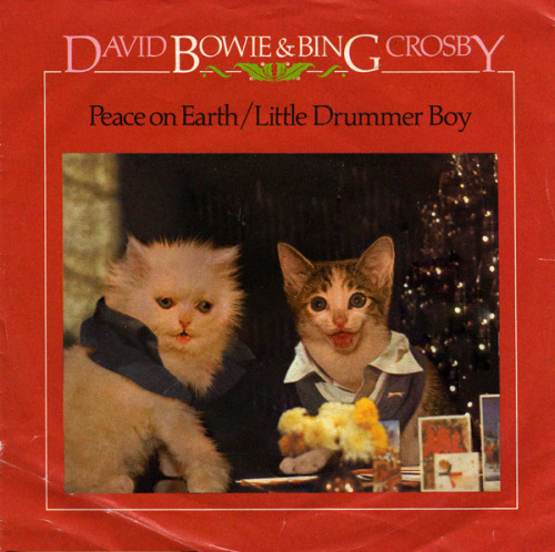 thekittencovers:  David Meowie and Bing Catsby