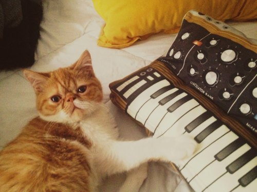 synthcats:  Pillow by softmachines.