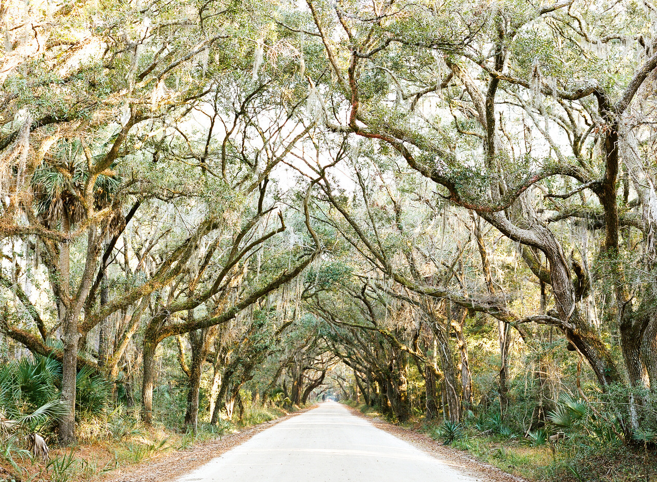 Back roads, South Carolina.  Contax 645, Portra 400 More from our Charleston trip to come, plus a print giveaway!  Like me on Facebook for details coming soon…